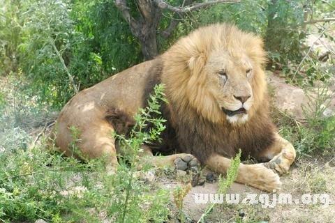 庄闲游戏狮子 雄狮