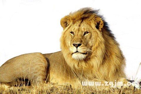 庄闲游戏狮子