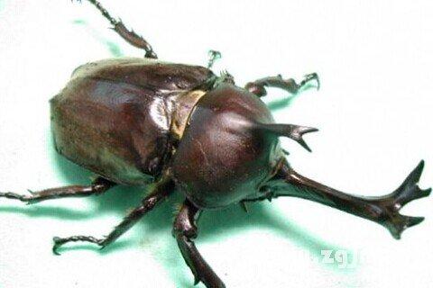 动物 昆虫类