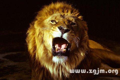 梦见狮子吼叫