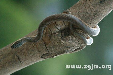 梦见蛇在咬人_周公解梦梦到蛇在咬人是什么意思_做梦