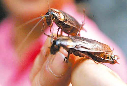 梦见蟑螂爬到身上